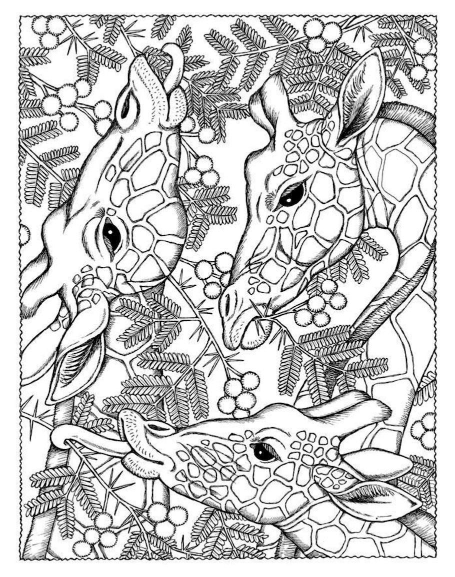 african giraffe doodle - African Giraffe Doodle