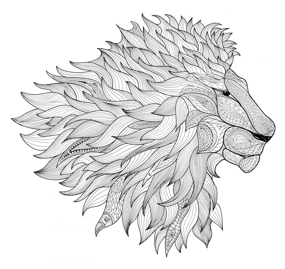 fire lion doodle - Fire Lion Doodle