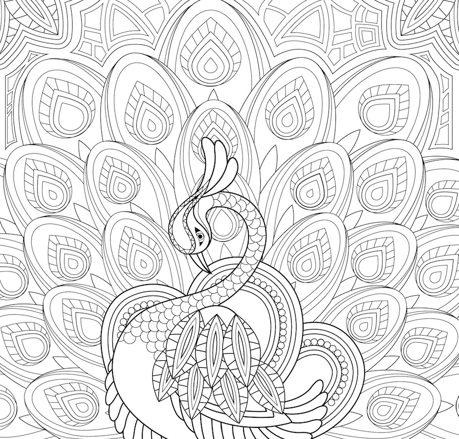 peacock feathers doodle - Peacock Feathers Doodle